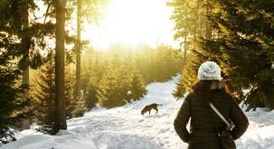 Zimski izlet v naravo vrne življenju potrebno svetlobo