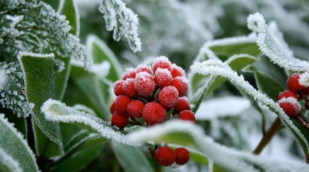 Krščanski božič je le eden od zamaskiranih poganskih praznikov, ki jih praznujemo v čast obujenih sil narave (foto: profimedia)