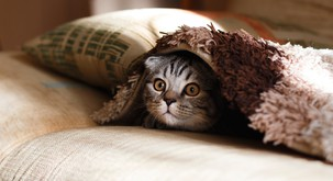 20 znakov, da ste v resnici mačka