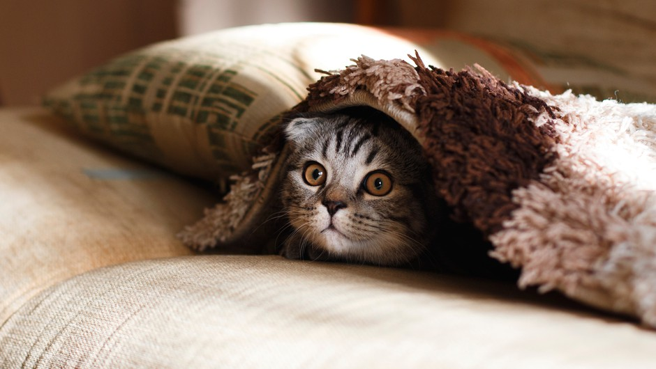 20 znakov, da ste v resnici mačka (foto: Unsplash)