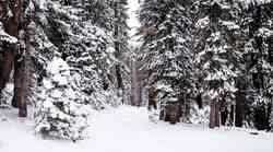 Kako nam lahko pomaga sprehod po gozdu