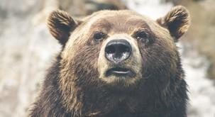 """""""Medved je naš brat, mi vsi smo ena družina"""""""