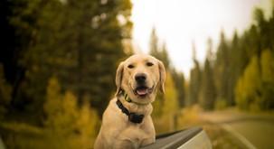 Psi lahko v človeku vzbudijo brezpogojno ljubezen