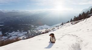 Tečaj: Kako varno v gore s psom?