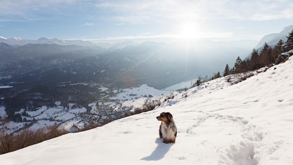 Tečaj: Kako varno v gore s psom? (foto: Katja Jemec)