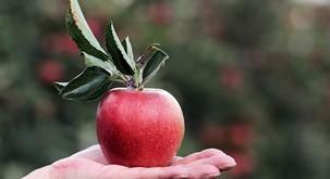 15 zanimivih dejstev o hrani