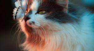 Spiritualne lastnosti mačk: vsaka mačka pride z razlogom