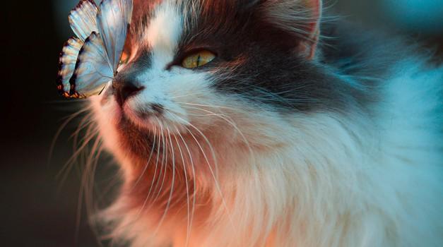 Spiritualne lastnosti mačk: vsaka mačka pride z razlogom (foto: Unsplash)
