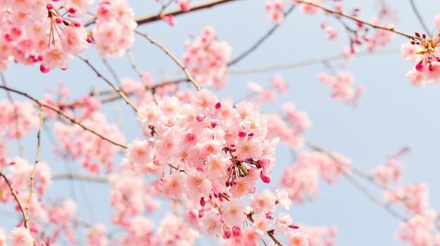 Kitajski horoskop od 23. do 28. 4. 2019 (foto: pixabay)