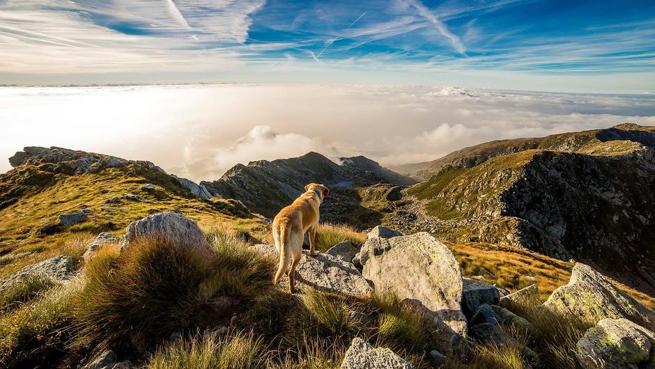 12 prošenj psa (foto: pixabay)