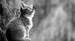 Mačja lekcija: Ali znamo enostavno biti in čutiti svet okoli sebe?