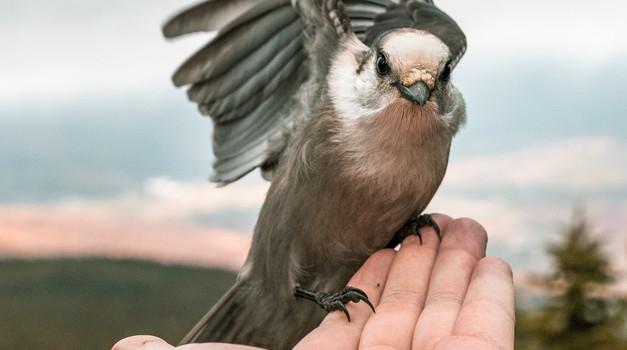 Ptice kot prenašalke duhovnih sporočil (foto: unsplash)