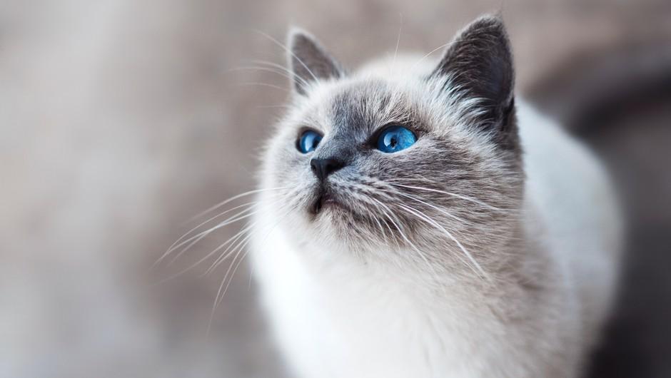 Mačka si izbere lastnika glede na njegovo energijo (foto: Unsplash)