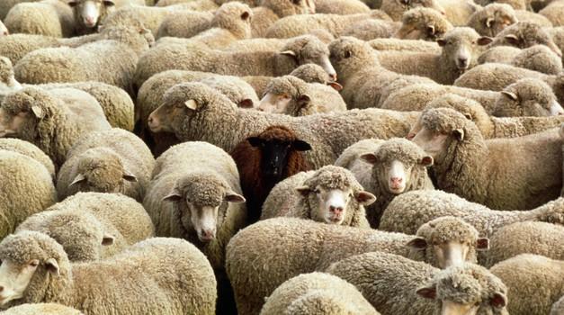 Črna ovce družine - dragocen dar za celotno družinsko drevo (foto: profimedia)