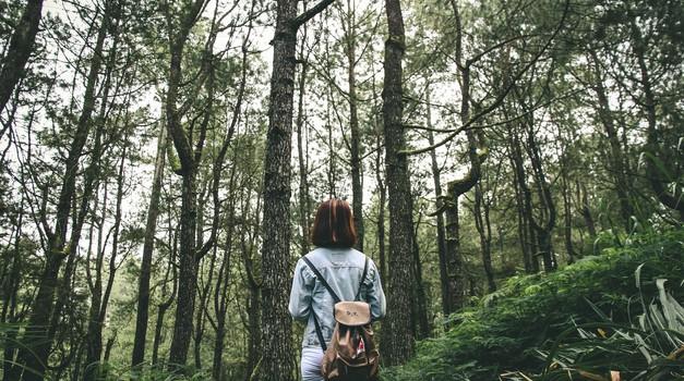 Ko je naša glava prepolna misli, jih gozdu nekako uspe umiriti (foto: unsplash)
