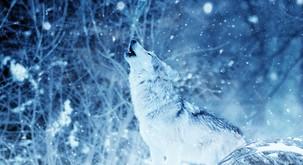 Bodite pogumen volk samotar!