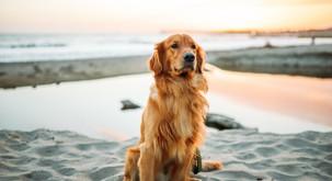 Edina napaka psov je, da je njihovo življenje prekratko